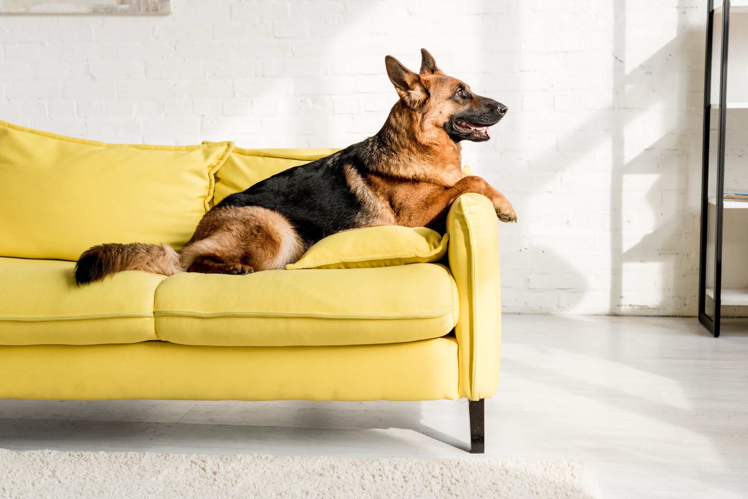 6 Tips for Raising a Dog in an Apartment